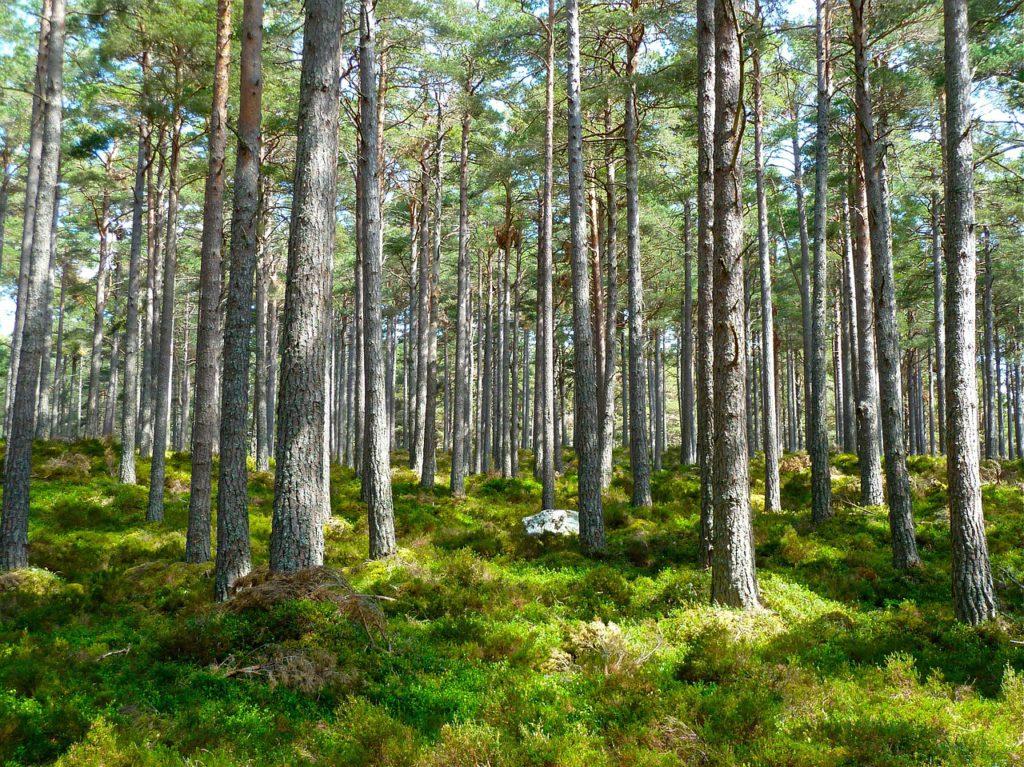 Wald - Natur - CO2 Einsparung